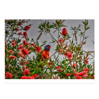 RAINBOW LORIKEET IN RURAL QUEENSLAND AUSTRALIA POSTCARD
