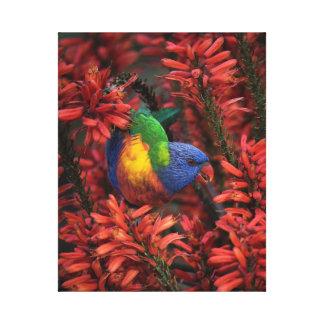 "Rainbow Lorikeet in Vibrant Red Aloe 16x20"" canvas Canvas Print"
