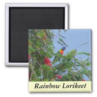 Rainbow Lorikeet Magnet