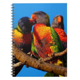 Rainbow Lorikeet notebook