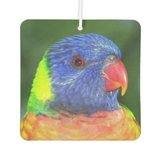 Rainbow Lorikeet Photo Car Air Freshener