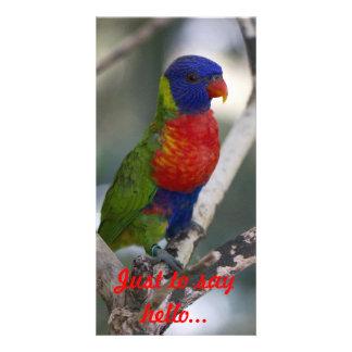 Rainbow Lorikeet Photo Card