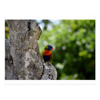 RAINBOW LORIKEET QUEENSLAND AUSTRALIA POSTCARD