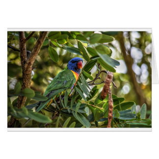 RAINBOW LORIKEET RURAL QUEENSLAND AUSTRALIA CARD