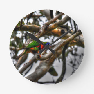 RAINBOW LORIKEET RURAL QUEENSLAND AUSTRALIA CLOCK