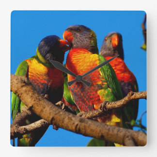Rainbow Lorikeet square clock