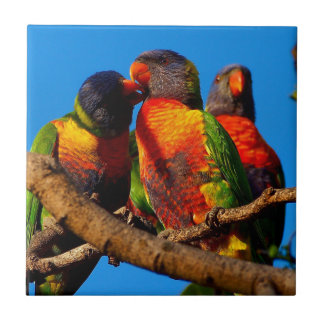 Rainbow Lorikeet square tile