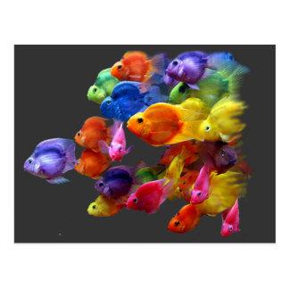 Rainbow of Parrotfish Postcard