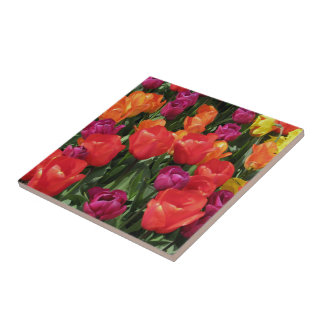 Rainbow Of Tulips Ceramic Tile