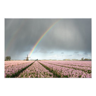 Rainbow over hyacinths and a windmill in Holland Photo Print