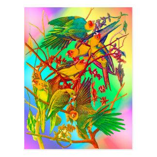Rainbow Parrot Parade Postcard
