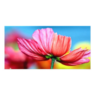 rainbow poppy photo greeting card