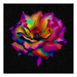 Rainbow Rose Blossom Poster (from $10.45)