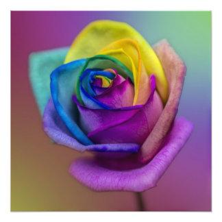 Rainbow Rose Flower Photographic Print