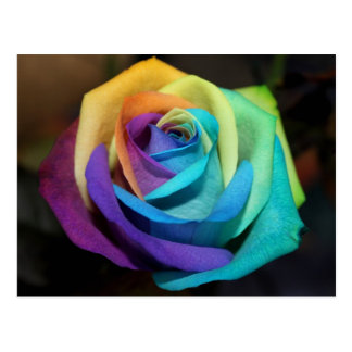 Rainbow Rose Office Personalize Destiny Destiny'S Postcard