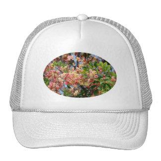 Rainbow Shower Tree Hat