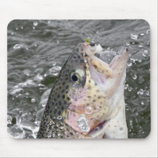 Rainbow Trout Takes The Bait Mouse Pad