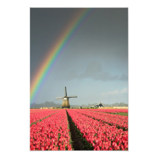 Rainbow, tulips and windmill vertical print