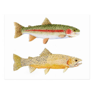 Rainbow & Westslope Cutthroat Trout Postcard. Postcard