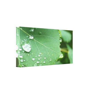 Raindrop Leaf Canvas Print