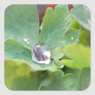 Raindrop on Columbine Leaf Square Sticker