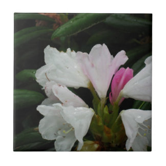 Raindrop on Rhododendrons Small Square Tile