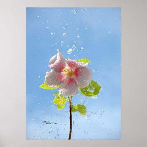 Raindrops Hibiscus Flower Poster