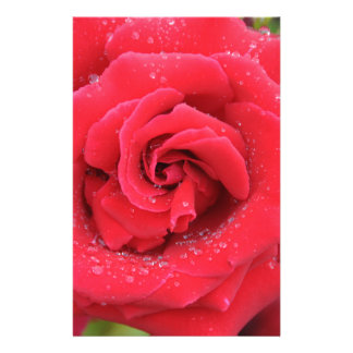 Raindrops on a Red Rose Customised Stationery