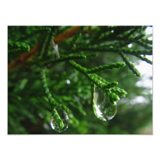 Raindrops on a tree branch photo print