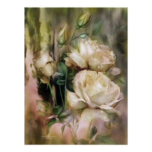 Raindrops On Antique White Roses Poster/Print