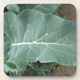 Raindrops on cauliflower leaves beverage coasters