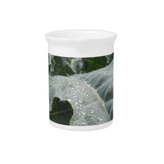 Raindrops on cauliflower leaves beverage pitcher
