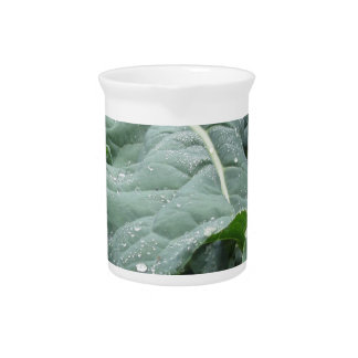 Raindrops on cauliflower leaves beverage pitchers