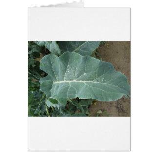 Raindrops on cauliflower leaves card