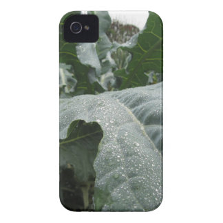 Raindrops on cauliflower leaves Case-Mate iPhone 4 cases