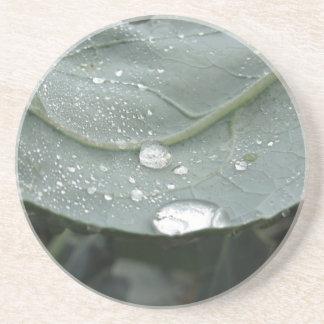 Raindrops on cauliflower leaves coaster