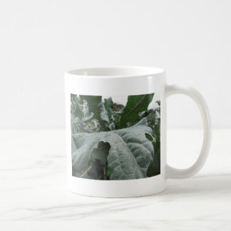 Raindrops on cauliflower leaves coffee mug