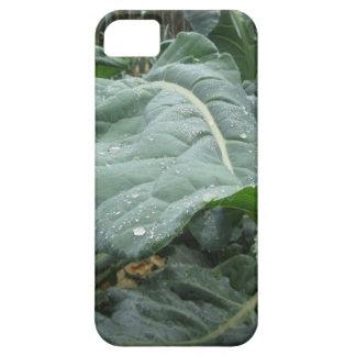 Raindrops on cauliflower leaves iPhone 5 cases