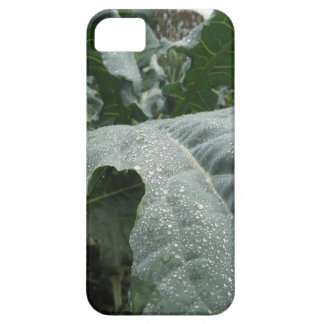 Raindrops on cauliflower leaves iPhone 5 covers