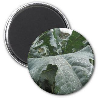 Raindrops on cauliflower leaves magnet