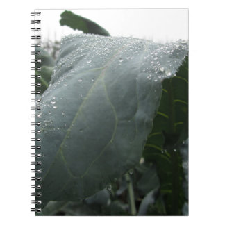 Raindrops on cauliflower leaves note book