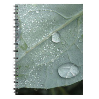 Raindrops on cauliflower leaves notebooks