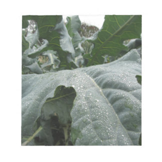 Raindrops on cauliflower leaves notepad