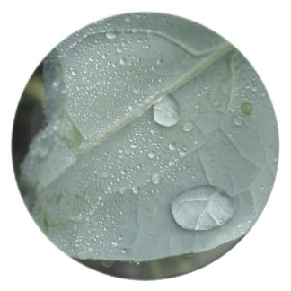 Raindrops on cauliflower leaves party plates