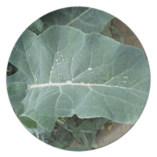 Raindrops on cauliflower leaves plate