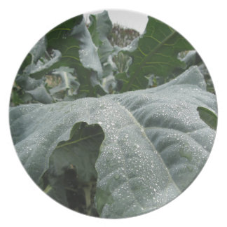 Raindrops on cauliflower leaves plates