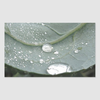 Raindrops on cauliflower leaves rectangular sticker