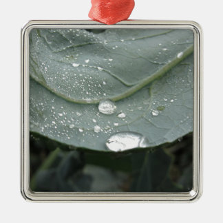 Raindrops on cauliflower leaves Silver-Colored square decoration