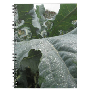 Raindrops on cauliflower leaves spiral note book