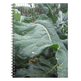 Raindrops on cauliflower leaves spiral notebook